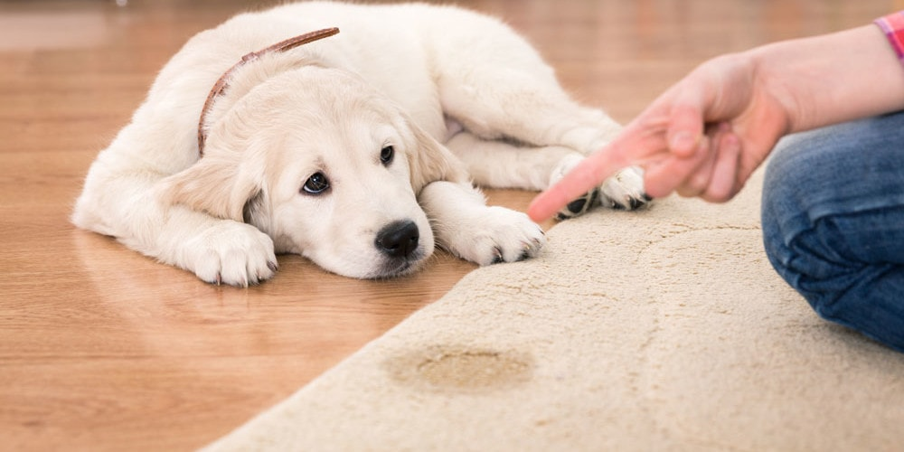 dog-urine-carpet-cleaning