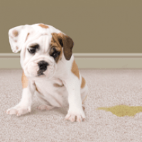 pet-stain-odor-treatment